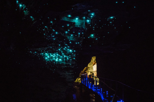 deal glow worm cave tour