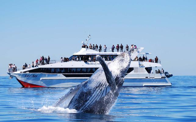 VIP Brisbane Whale Watching
