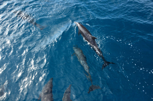 dolphins-wildlife-watching