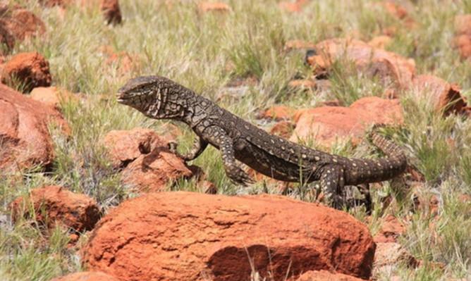 Alice Springs to Uluru tour coupon code