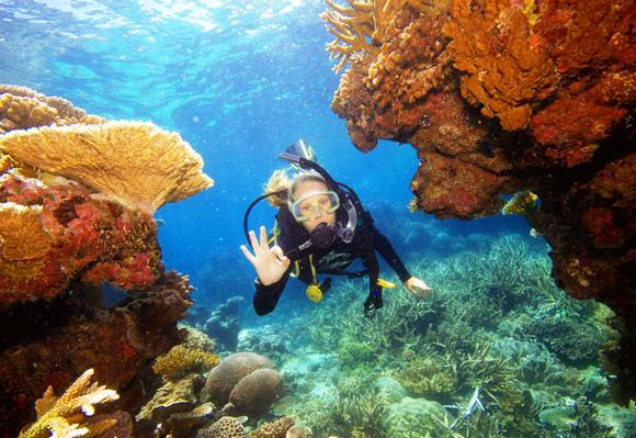 Reef Magic Great Barrier Reef