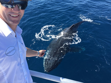 Half Day Whale Watching Experience from Bundaberg