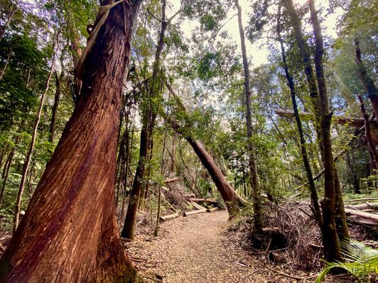 Springbrook National Park Hiking Tour