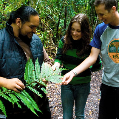 Northern New Zealand forest tour