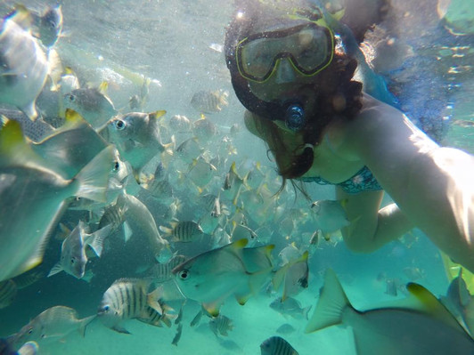 Tangalooma Snorkeling