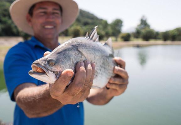 barramundi catch and release fishing