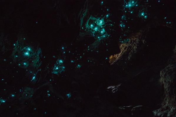 glowworm cave tour waitomo deal