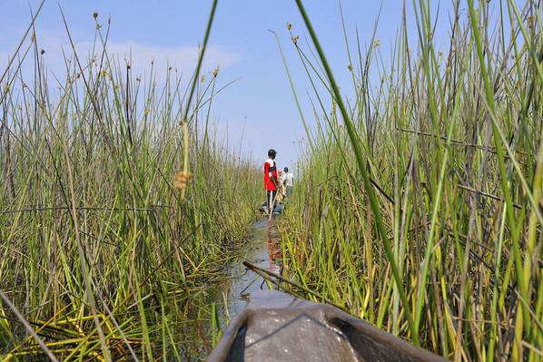 Okavango delta south africa