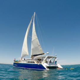 Ningaloo Humpback Whale Swim And Catamaran Ride