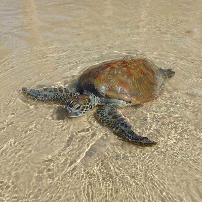 rainbow beach turtle kayak deals