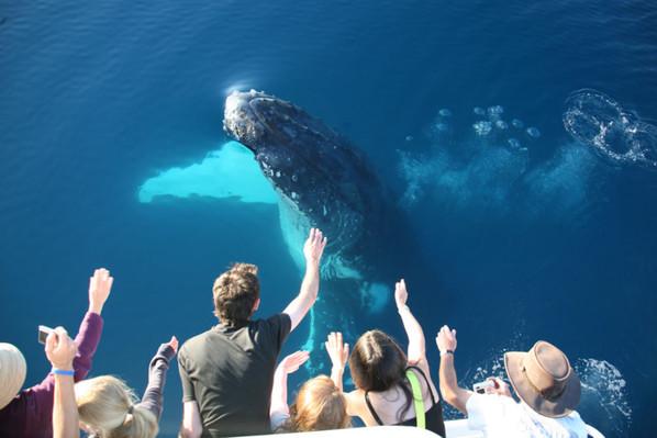 whale watch hervey bay  tour