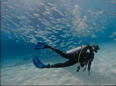 Dive & Snorkelling