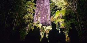 Meet Tane In Waipoua Forrest