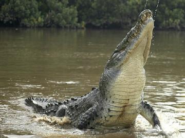 Tarcoles River Crocodile Safari from Jacó
