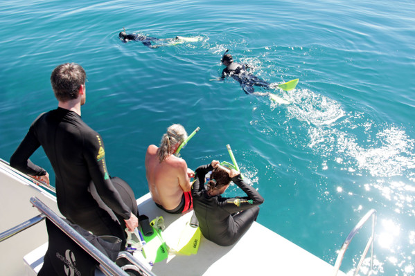 1Dive great barrier reef
