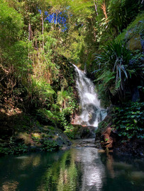 Rainforests of Lamington Wilderness Tour from the Gold Coast