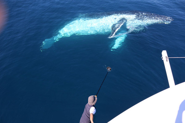 Whale Watching Cruise Deals