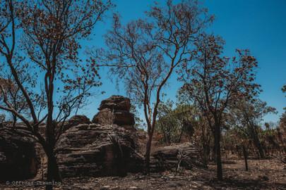 Kakadu National Park Day Tour