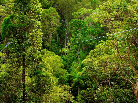 Mount Tambourine Zip Line