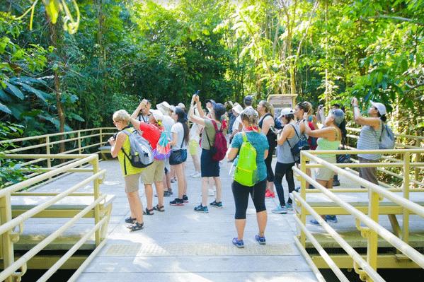rainforest-walk-national-park