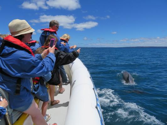 Kangaroo Island Dolphin Tour Deals