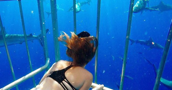 Oahu Shark Cage Diving