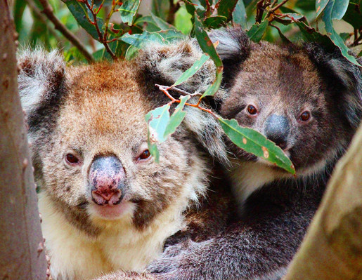 Kangaroo Island Quad Bike Adventure Wildlife