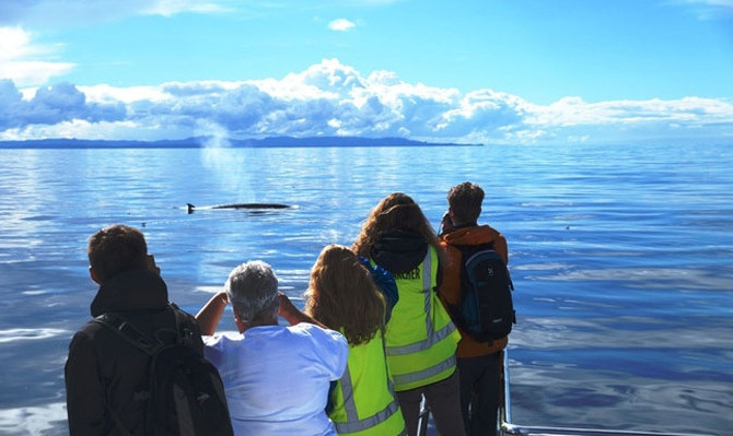 auckland whale and dolphin safari experience