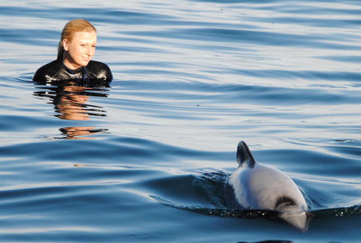 Akaroa Harbour Swim with Dolphins Cruise - 3 Hours