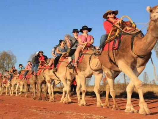 Uluru Camel Express Tour