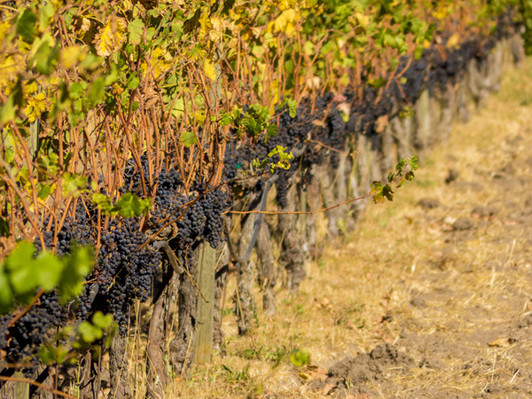 Half Day Wine Country Tour deals