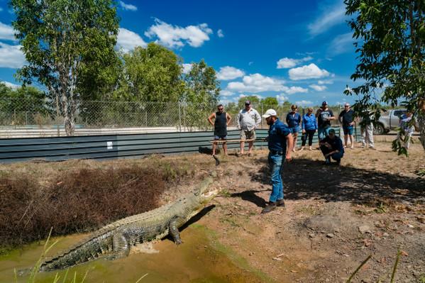 Matt Wright Crocodiles