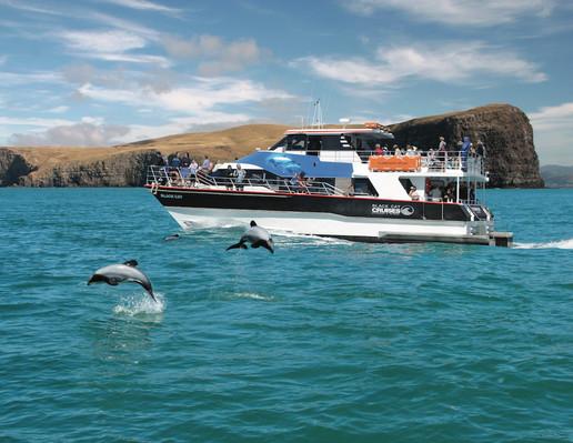Black Cat akaroa nature cruise