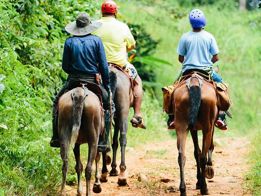 tocori-horse-back-riding-tour