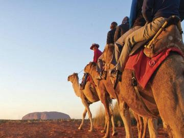2H30M Uluru Sunset Camel Tour