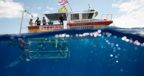 Shark Cage Diving Tour North Shore Oahu