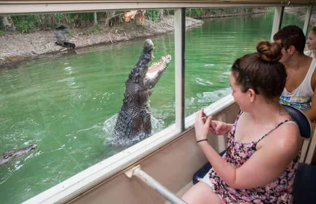 Hartley's Crocodile Adventure