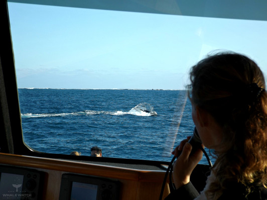 Whale Watching Tour From Perth