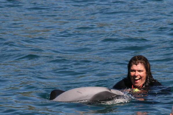 coupon akaroa dolphin cruises