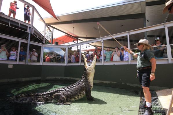 crocodile tour discount