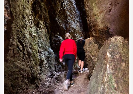 Springbrook National Park Day Tour deal