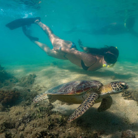 Low Isles Cruise And Snorkel Tour