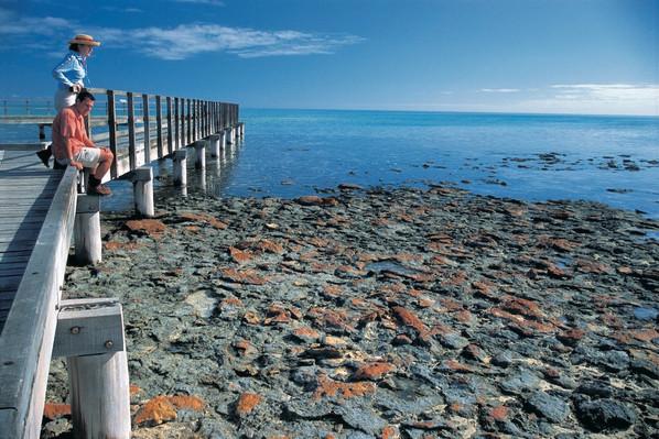 Stromatolites at Hamelin Pool, south east of Denham, Shark Bay, Tourism WA, 103844.jpg
