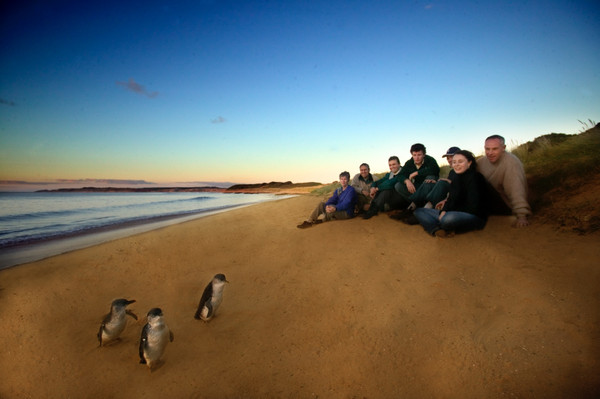 Phillip Island Penguin Parade One Day Tour