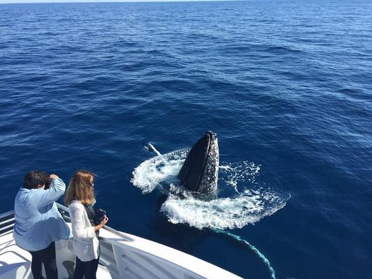 Bundaberg Whale Watching Tour deals