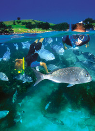 Goat Island Guided Snorkel for Beginners