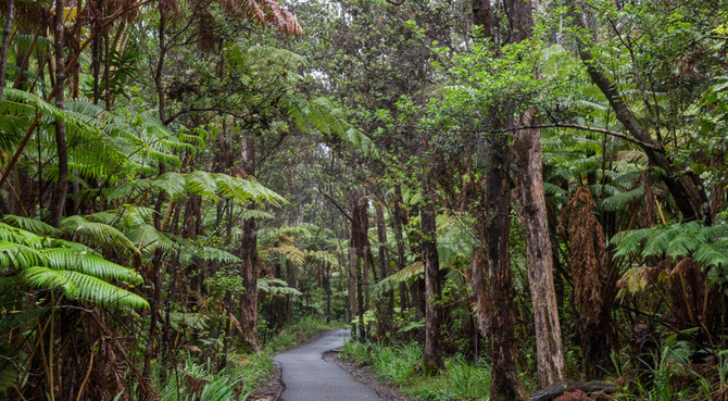 Circle Island Rainforest
