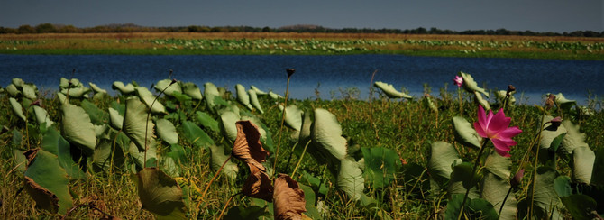 Mikinj Valley (Red Lily) Arnhem Land Sightseeing Tour From Darwin