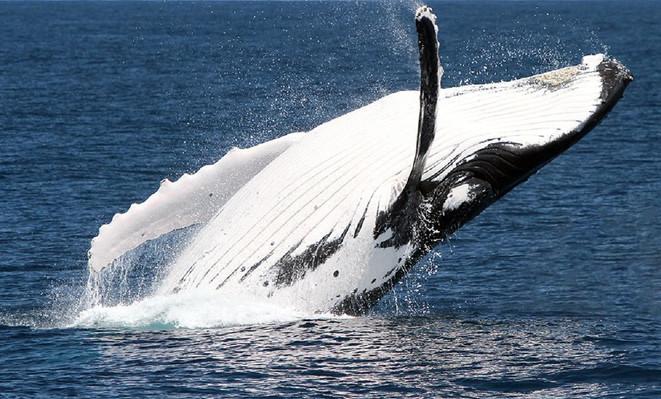 Brisbane Whale Watching deals