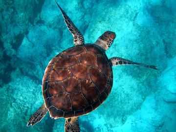 Oahu : Glass Bottom Boat Tour in Waikiki